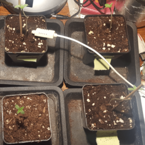 Balances issues showing up on Cannabis plant