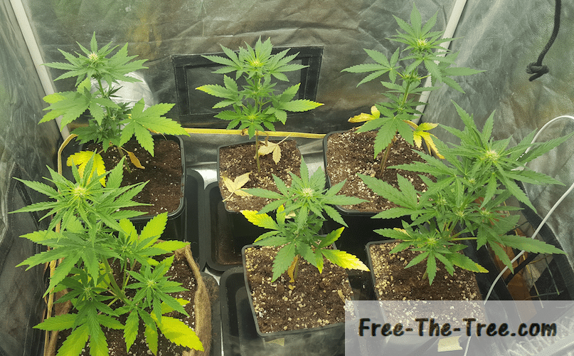 Top 10 Indoor Growing Problems and How to Spot Them thumbnail