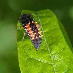 Close up on larvae on a leaf