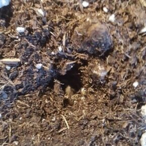 2 cm hole in soil in order to place the marijuana seed