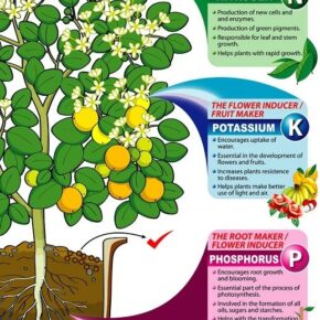 Description of the use of Nitrogen, Potassium and Phosphorus in weed