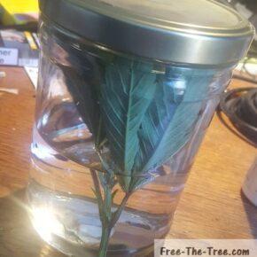 jar closed maintaining 100% humidity