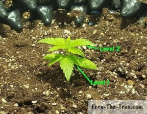 focus on weed plant growing its 2nd stage