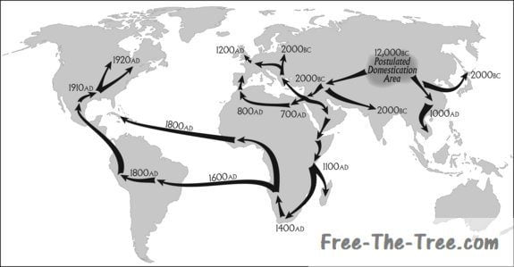 map of the world showing the spread of marijuana from 10,000BC to the New World