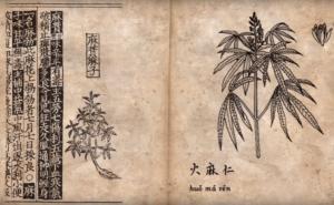 Ancien Chinese medicinal description of weed