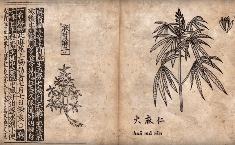 History of Marijuana - A plant that has grown with Mankind