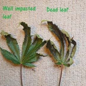 2 leaves at end of the deficiency