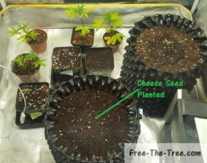 Seed planted into final pot