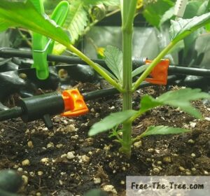 drip irrigation system automatically and slowly watering the plant