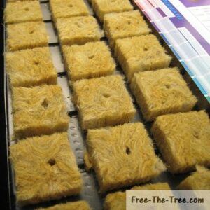 rock wool cubes ready for seeds or cuttings
