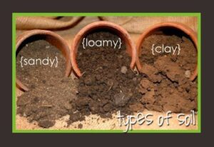 examples of clay and loamy soil