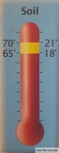 Ideal soil temperature between 18°C and 21°C