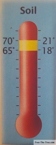 Ideal soil temperature between 18°C and 21°C