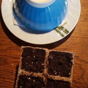 Germinated seeds planted in organic pot