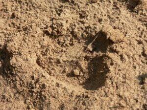 dry, sandy soil