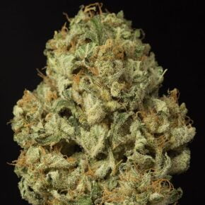 Dinamex Autoflowering Seeds - tiger-one-seeds-by-dinafem-seeds - 1