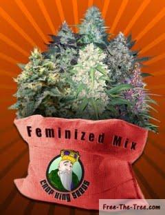 Feminized Seeds Mix - crop-king-seeds - 10