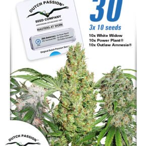 30th Anniversary Mix Feminized Seeds - tiger-one-seeds-by-dutch-passion - 30