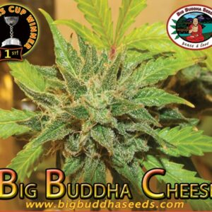 thumbnail Big Buddha Cheese Feminized Seeds