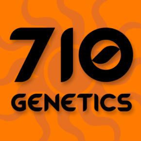 710 Cheese Feminized Seeds - seedsman-by-710-genetics - 3