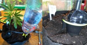 bottle drip system watering a plant
