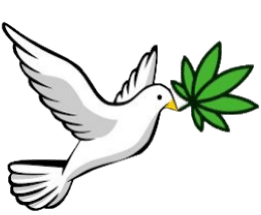 dove carryin a cannabis leaf, representing its freedom