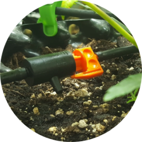 line drip irrigation system setup