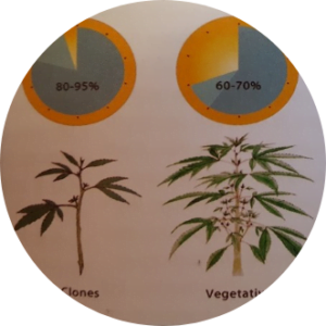 Cloning, vegetation and flowering humidity levels detailed