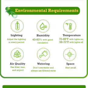 infographic on how to set up a grow room