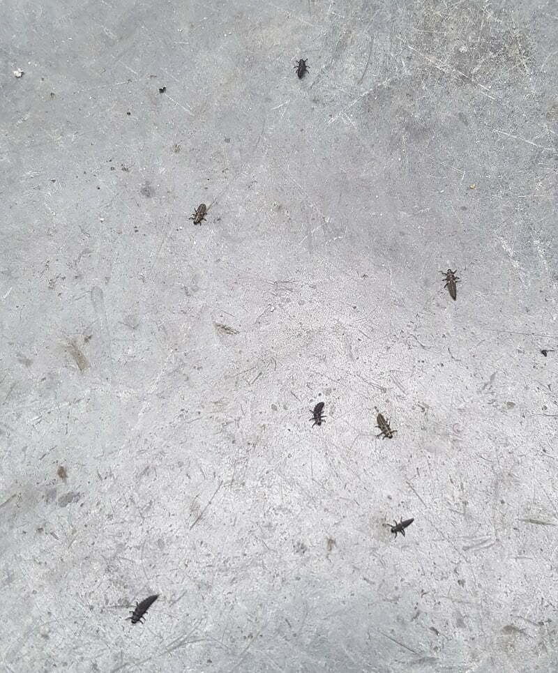 larvae dropped on the floor - 2 dead
