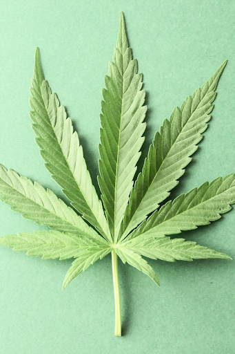 cannabis-leaf-green-background