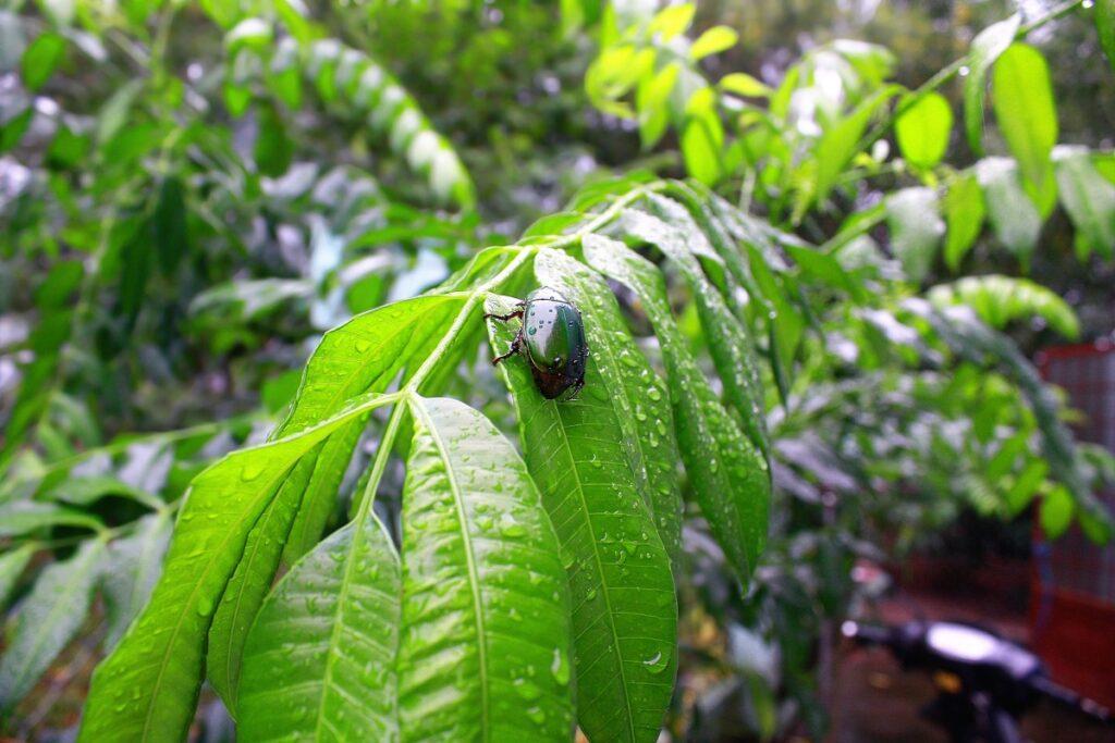 beetle feeding of foliage