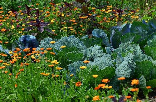 garden full of companion plants