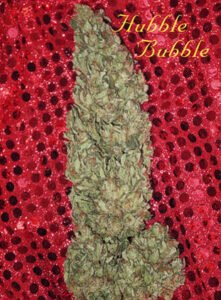 thumbnail Hubble Bubble Feminized Seeds