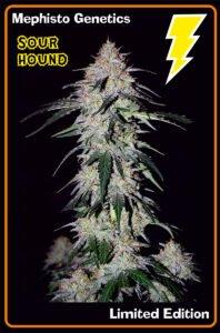 thumbnail Sour Hound Autoflowering Seeds