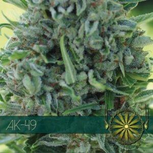 thumbnail AK-49 Feminized Seeds