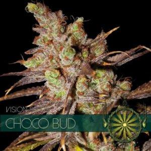 thumbnail Choco Bud Feminized Seeds