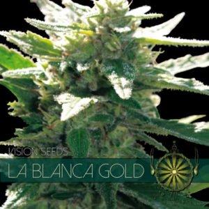 thumbnail La Blanca Gold Feminized Seeds