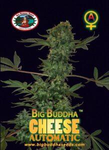 thumbnail Big Buddha Cheese Autoflowering Seeds