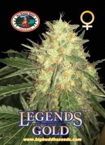 thumbnail Legends Gold Feminized Seeds