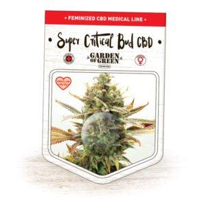 thumbnail Super Critical Bud CBD Feminized Seeds