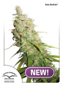 thumbnail Desfran Autoflowering Seeds