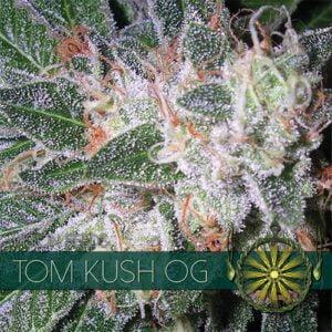 thumbnail Tom Kush OG Feminized Seeds