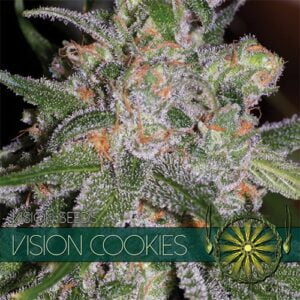 thumbnail Vision Cookies Feminized Seeds
