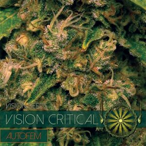 thumbnail Vision Critical Autoflowering Seeds