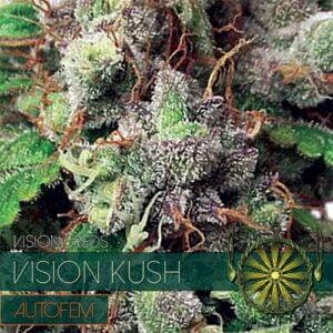 thumbnail Vision Kush Autoflowering Seeds