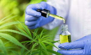 Hand holding Pipette with cannabis oil against Cannabis plant, CBD Hemp oil, medical marijuana oil concept