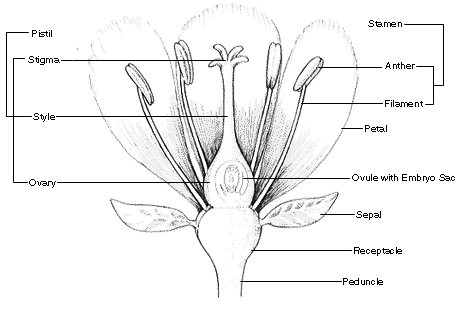 names of each parts of a Flower